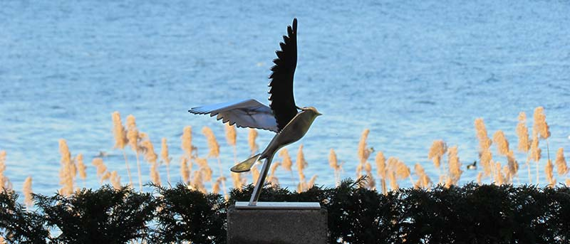 stainless-steel-animal statue- lapwing-lapwing Zeewolde